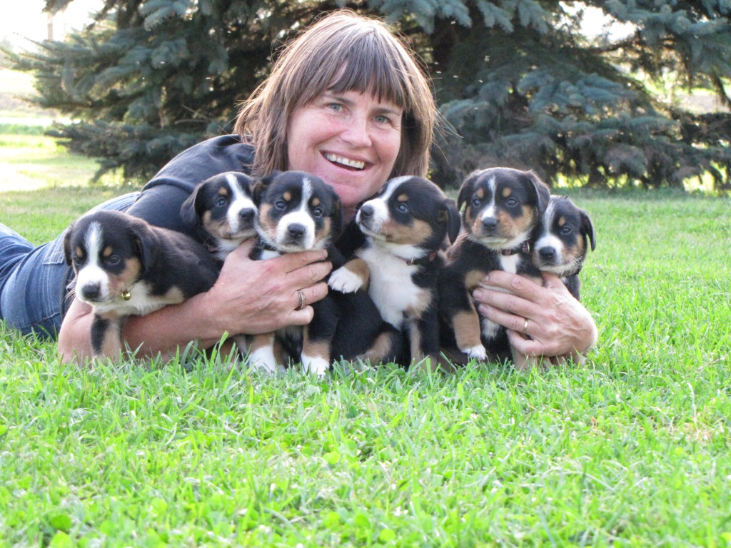 Bouvier d'Entlebucher – Chiots disponibles