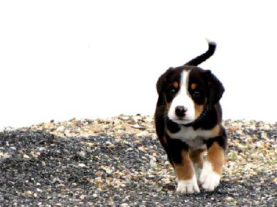 swissydog_marianne-6